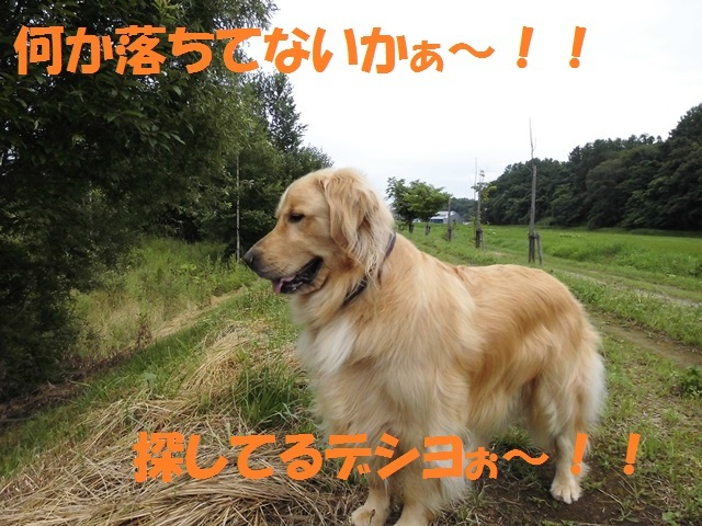 CIMG1821_P.jpg