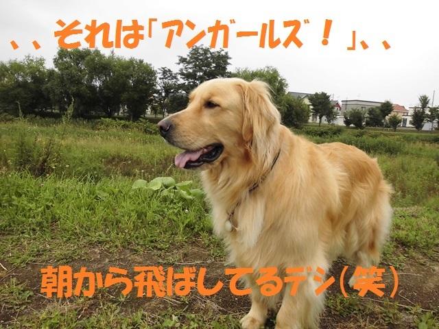 CIMG1943_P_20170804211306354.jpg