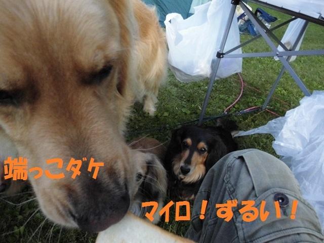 CIMG2032_P.jpg
