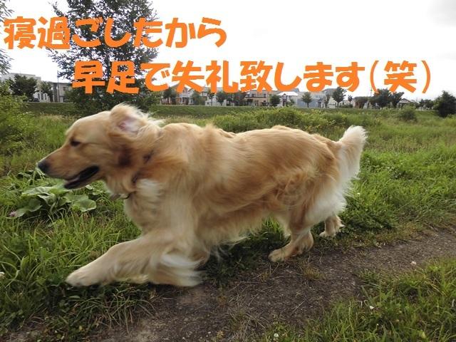 CIMG2103_P.jpg