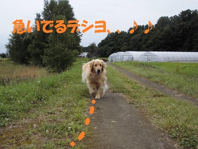 CIMG2114_P.jpg