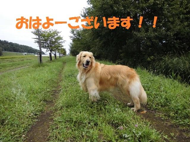 CIMG2395_P.jpg