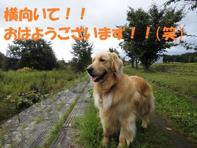 CIMG2398_P.jpg
