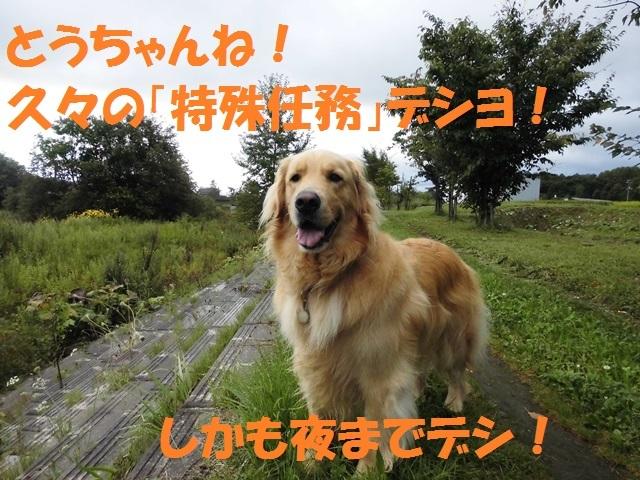 CIMG2399_P_201708252335334ce.jpg