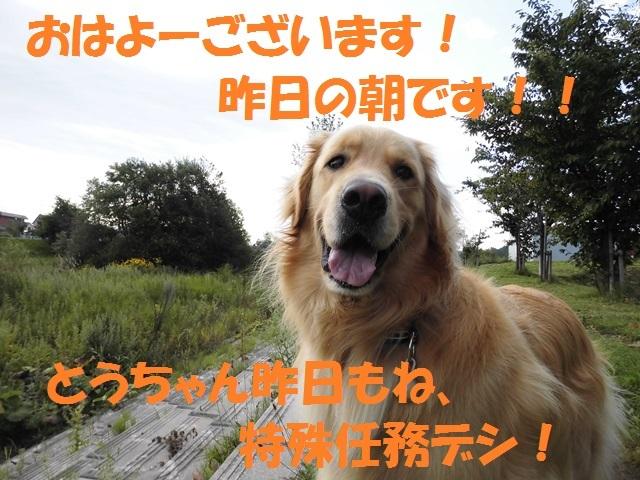 CIMG2401_P_2017082709321139c.jpg