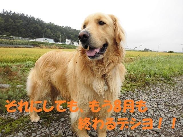CIMG2410_P_201708281950096ce.jpg