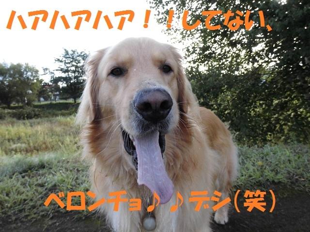 CIMG2419_P.jpg
