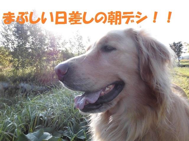 CIMG2493_P.jpg