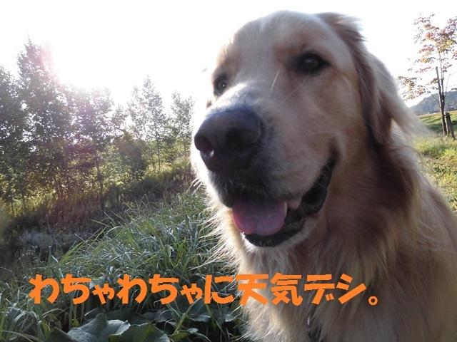 CIMG2495_P.jpg