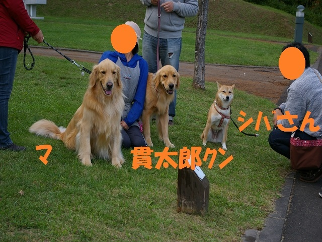 IMGP2084_P.jpg