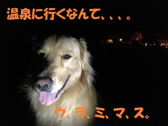 IMG_4455_P.jpg