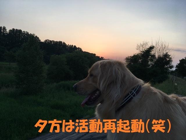 IMG_4499_P.jpg
