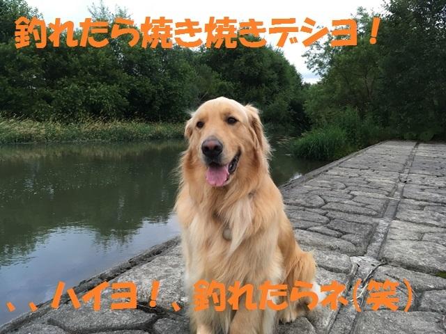 IMG_4580_P.jpg