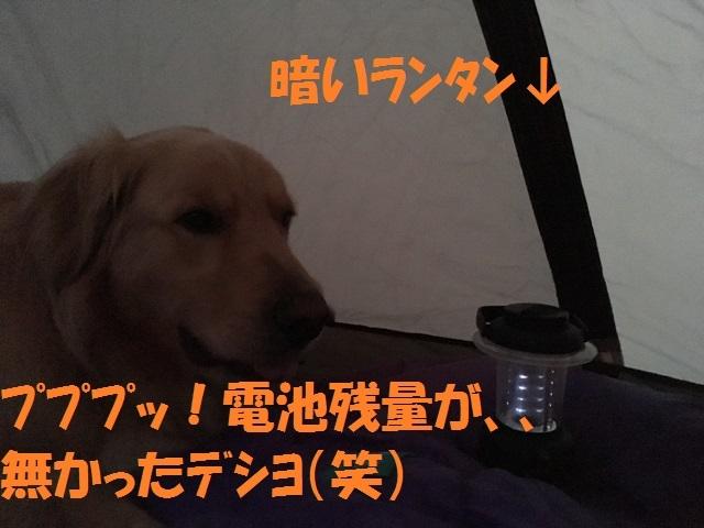 IMG_4713_P.jpg