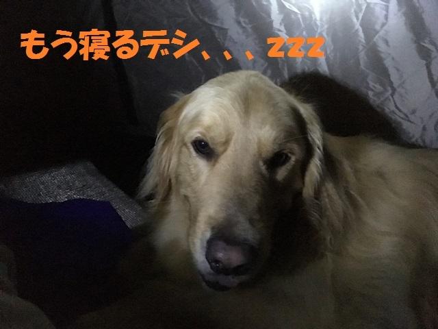 IMG_4718_P.jpg