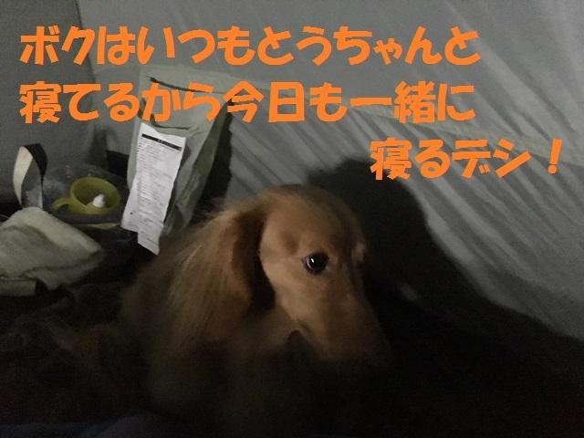 IMG_4845_P.jpg