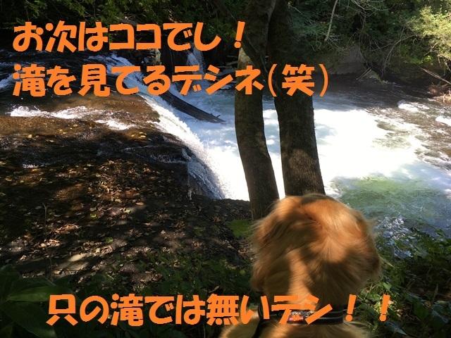 IMG_5345_P.jpg