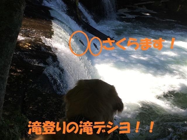 IMG_5378_P.jpg