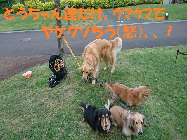 IMG_6241_P_2017091817224169a.jpg