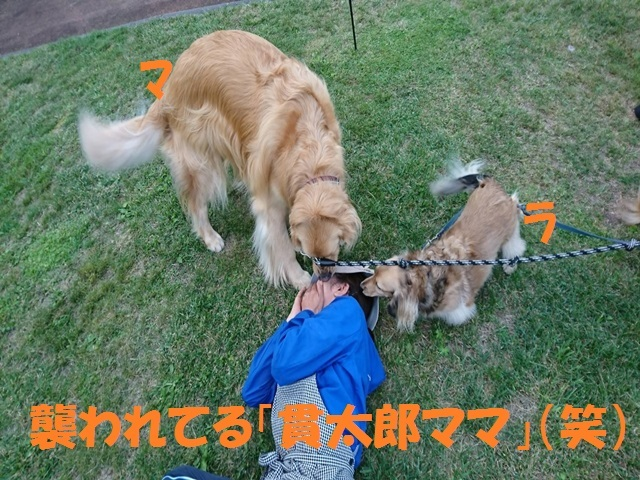 IMG_6244_P.jpg