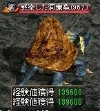 感染した洞窟亀