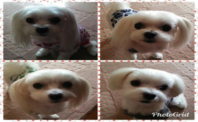 PhotoGrid_1505695757557_convert_20170918095713.jpg