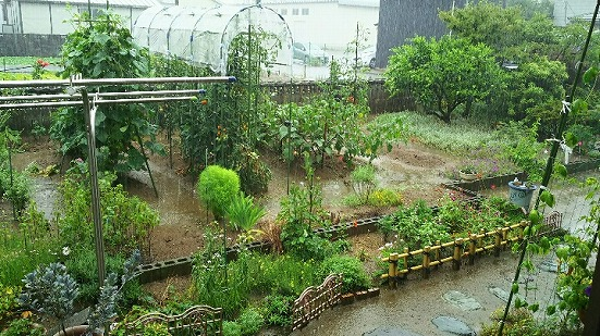 実家の梅雨