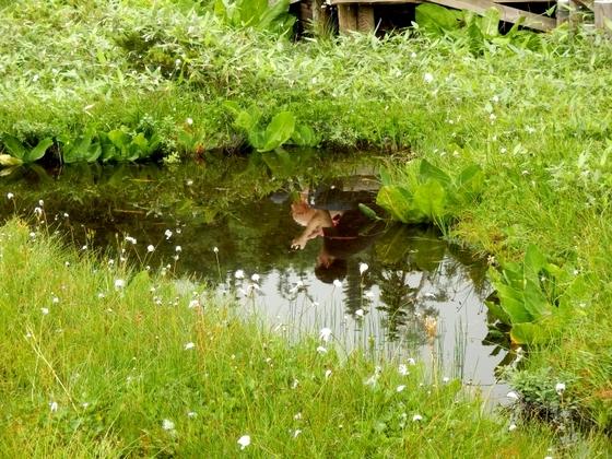 栂池 (117)
