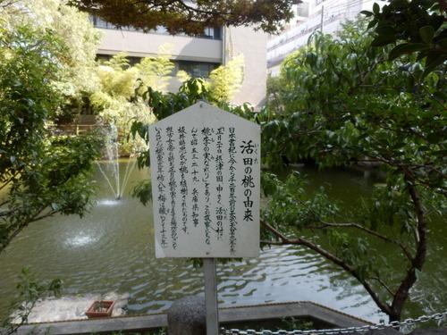 生田神社 (5)