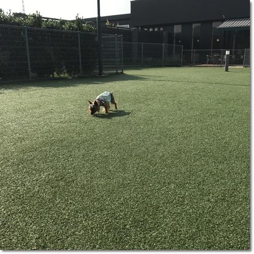 桜えびIMG_0081-20170716