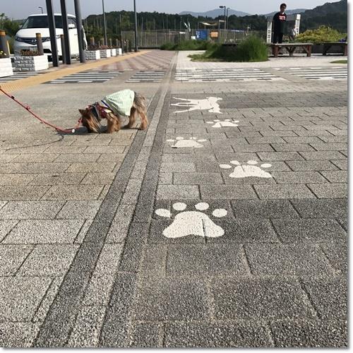 桜えびIMG_0086-20170716