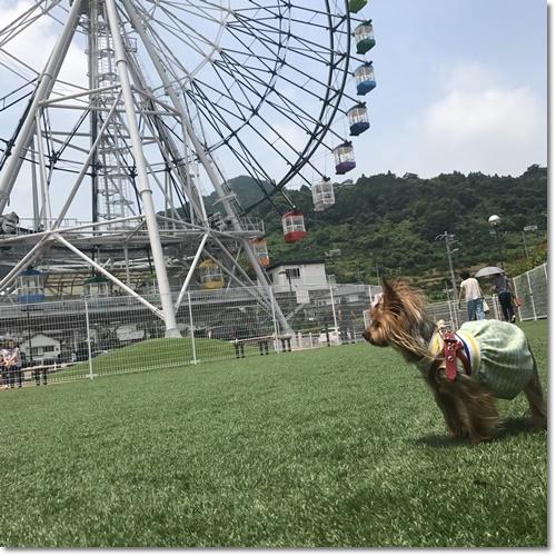 桜えびIMG_0104-20170716