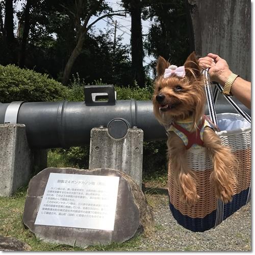 桜えびIMG_0112-20170716