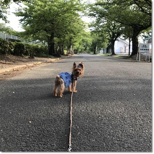 朝散歩IMG_0165-20170722