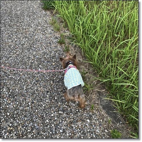朝散歩IMG_0221-20170723
