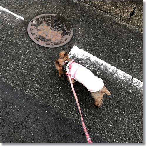 ちょこらIMG_0889-20170815