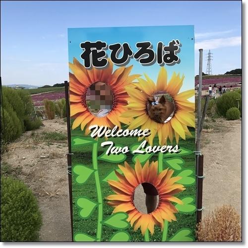 ひまわり畑IMG_0982-20170826