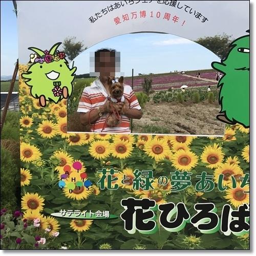 ひまわり畑IMG_0983-20170826