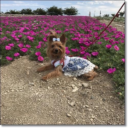 ひまわり畑IMG_0985-20170826