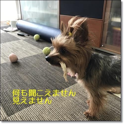 食いしん坊IMG_0938-20170826