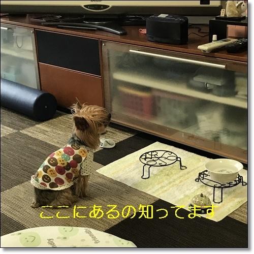 食いしん坊IMG_0958-20170826
