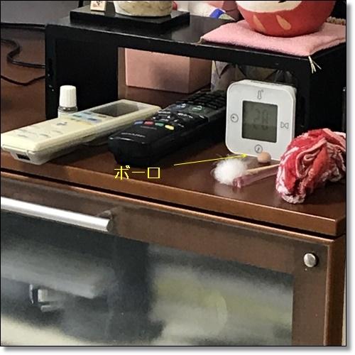食いしん坊IMG_0959-20170826