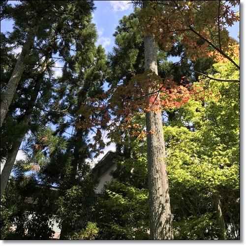 京都IMG_1143-20170902