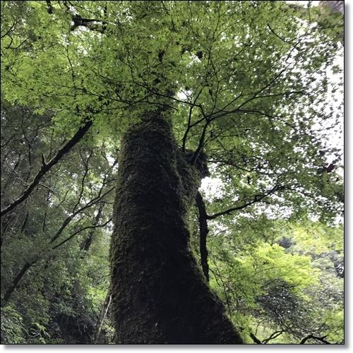 伊賀IMG_1465-20170918