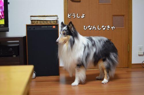 IMG_6153.jpg
