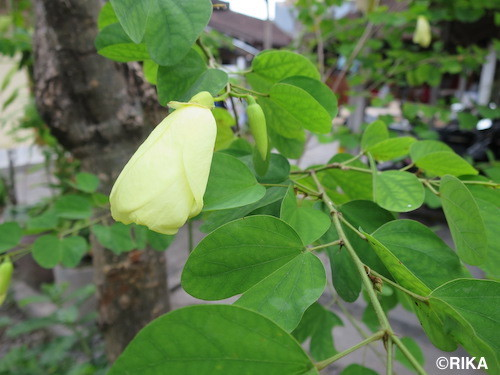 flowers10-03/08/17
