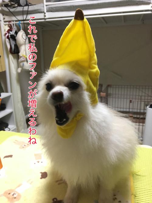 IMG_7724blog.jpg