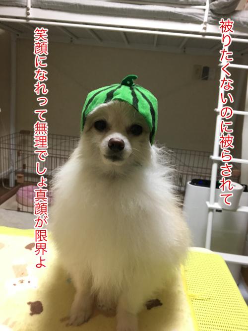 IMG_7731blog.jpg