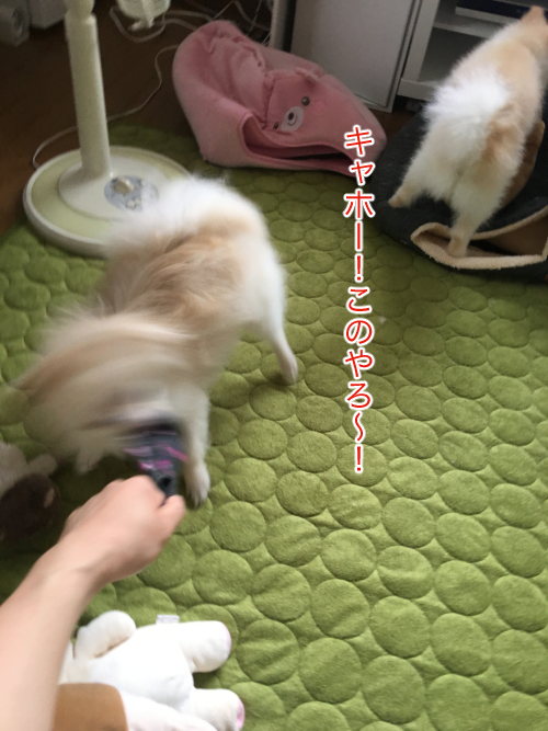 IMG_7751blog.jpg