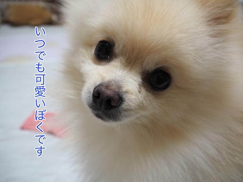 P8260468blog.jpg